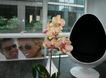 Smile Center egg chair with flower